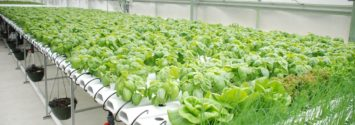 Hydroponics in South Africa