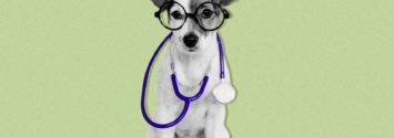 Pet insurance South Africa